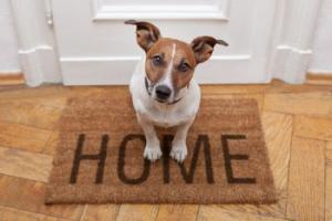 Dog Dander Allergy Relief