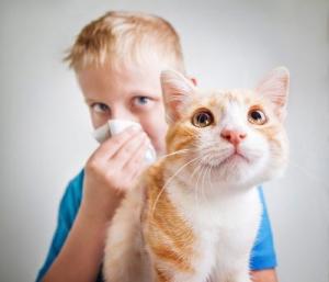 Pet Dander Allergy Relief